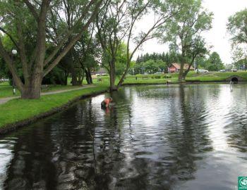 Zabezpieczanie Oczka Wodnego Konstancin-Jeziorna 08.06.2013