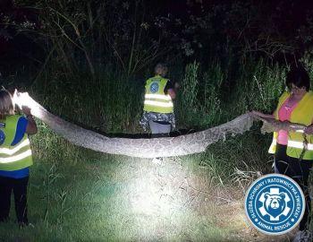 Poszukiwania blisko 6metrowego węża w Gassach